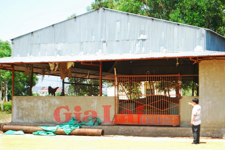 Gia Lai: Lò sấy bỏ không, dân phơi nông sản giữa đường
