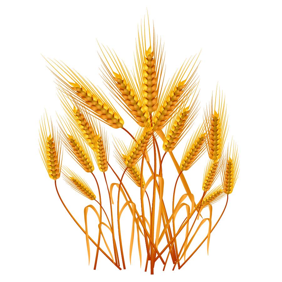 黄金色に実った麦の穂 YELLOW ... : カレンダー 無料素材 : カレンダー