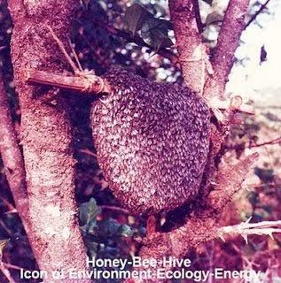 Bee-Honey-Hive