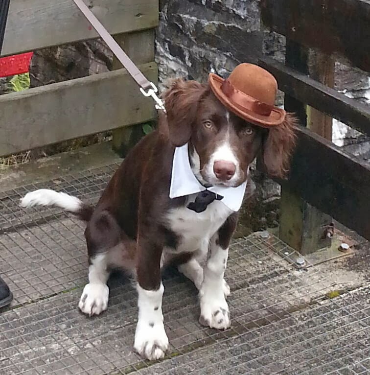 Cute dogs - part 11 (50 pics), dog wears tie and hat