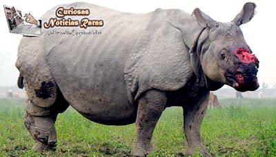 Maltrato de Rinocerontes