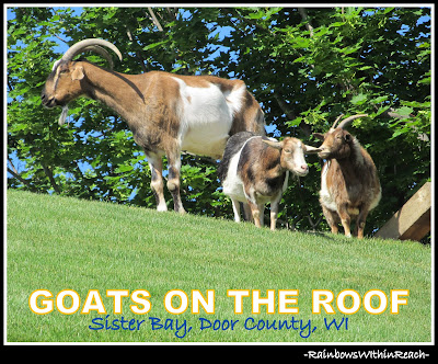 photo of: Goats on the Roof in Sister Bay, WI