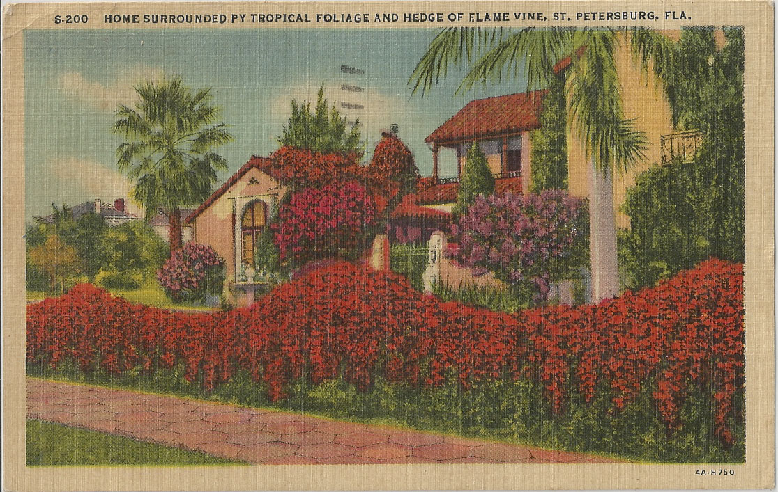 Postcard Messages from the Past: Home Surrounded by Tropical Foliage ...