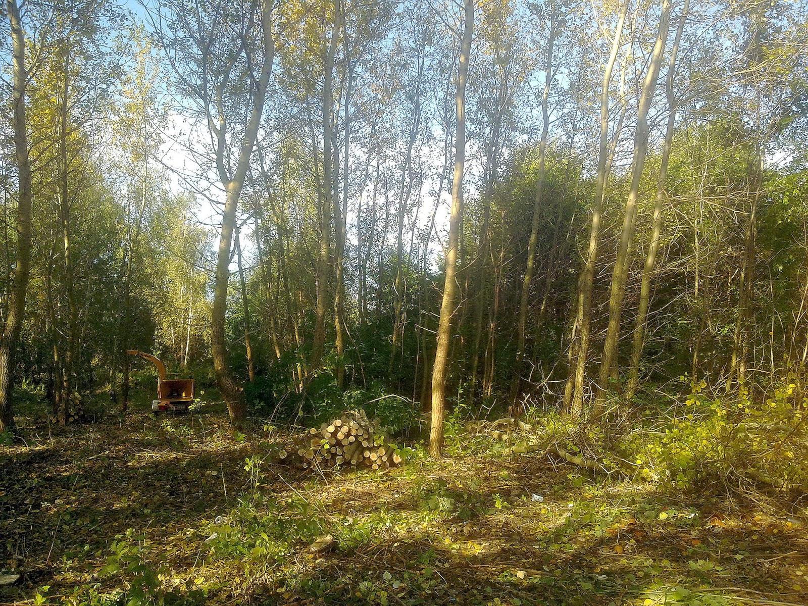 wycinka drzew,przygotowanie terenu pod inwestycje, inwentaryzacja drzew, pomiar drzew, Warszawa