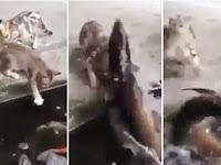 Balas Dendam, Ikan Seret Kucing ke Kolam