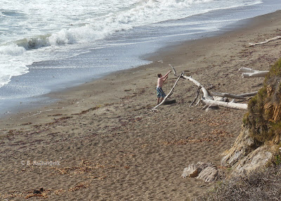 Building with Driftwood on Moonstone Beach in Cambria, © B. Radisavljevic