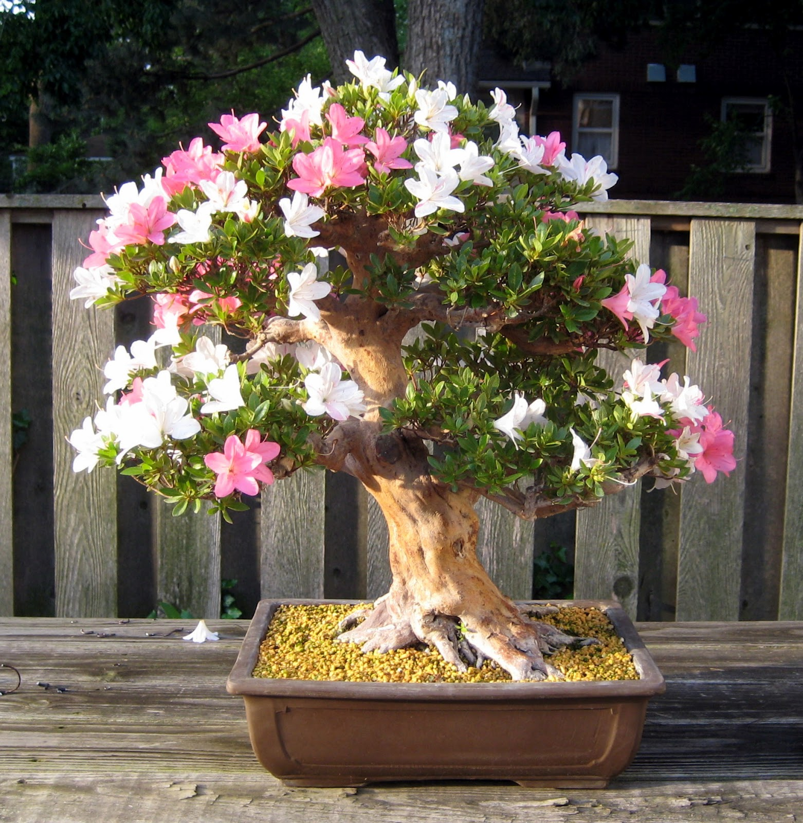 Nebraska Bonsai Society May 2012