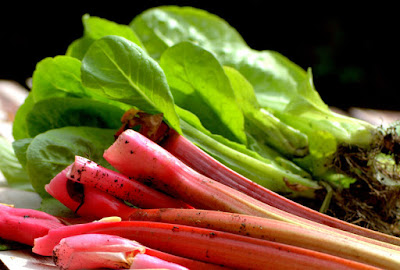Rhubarb is a a healthy superfood & Recipe