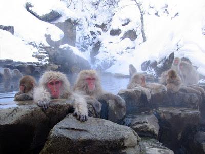 Jigokudain Monkey Park
