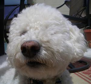 Meet Baxter