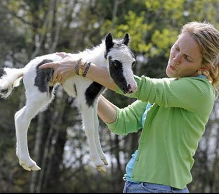 Einstein the smallest horse in the world - photo#19