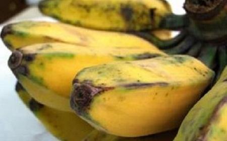 pisang kepok untuk kolak