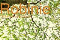 http://kolonihavelivet.blogspot.dk/2015/11/robinie-robinia-pseudoacacia.html