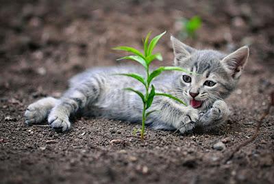 Muchas fotos de gatitos lindos sólo para coleccionistas