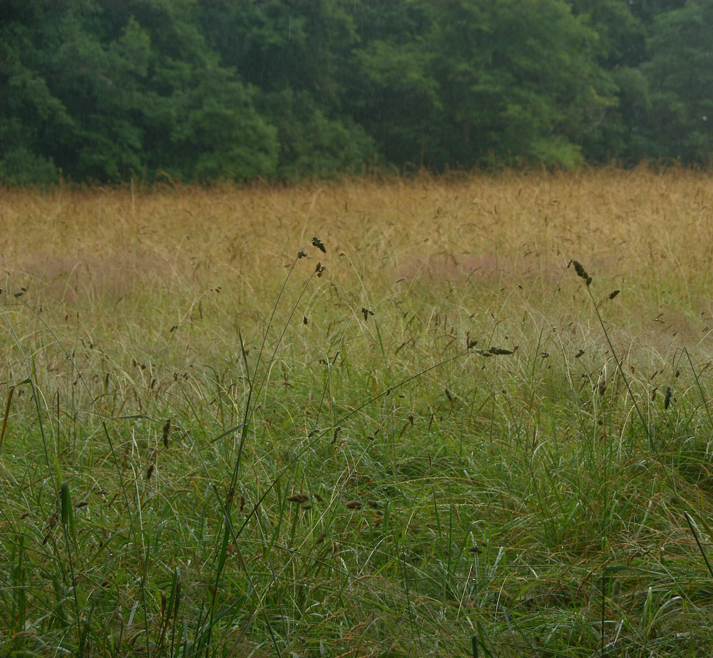 natural wood meadow grass - photo #24