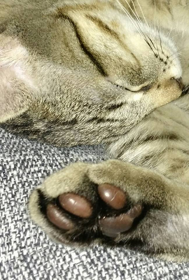 Hugo, o gato