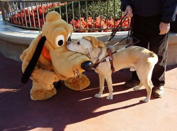 funny animal pics, animal photos, a dog hugs pluto