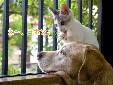 子猫とラブラドール