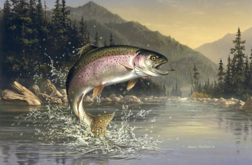 Rainbow trout oncorhynchus mykiss for How to fish for rainbow trout