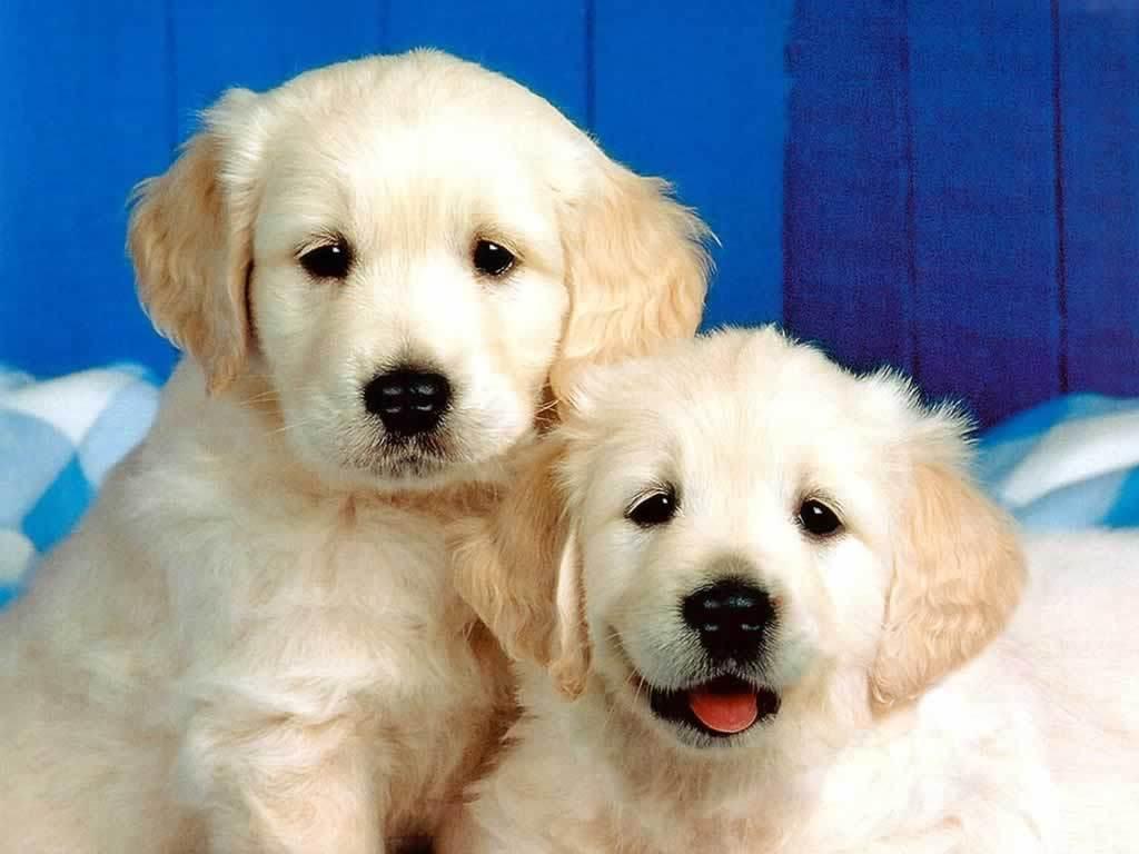 http://4.bp.blogspot.com/-mPVfXMangjs/T-Bj3uM0MFI/AAAAAAAADPg/1GE6D2nnmTo/s1600/Puppies-3-dogs-1993812-1024-768.jpg