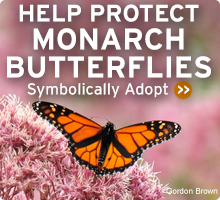 monarch adoption banner