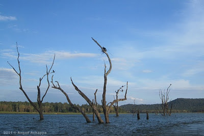 Kabini Backwaters
