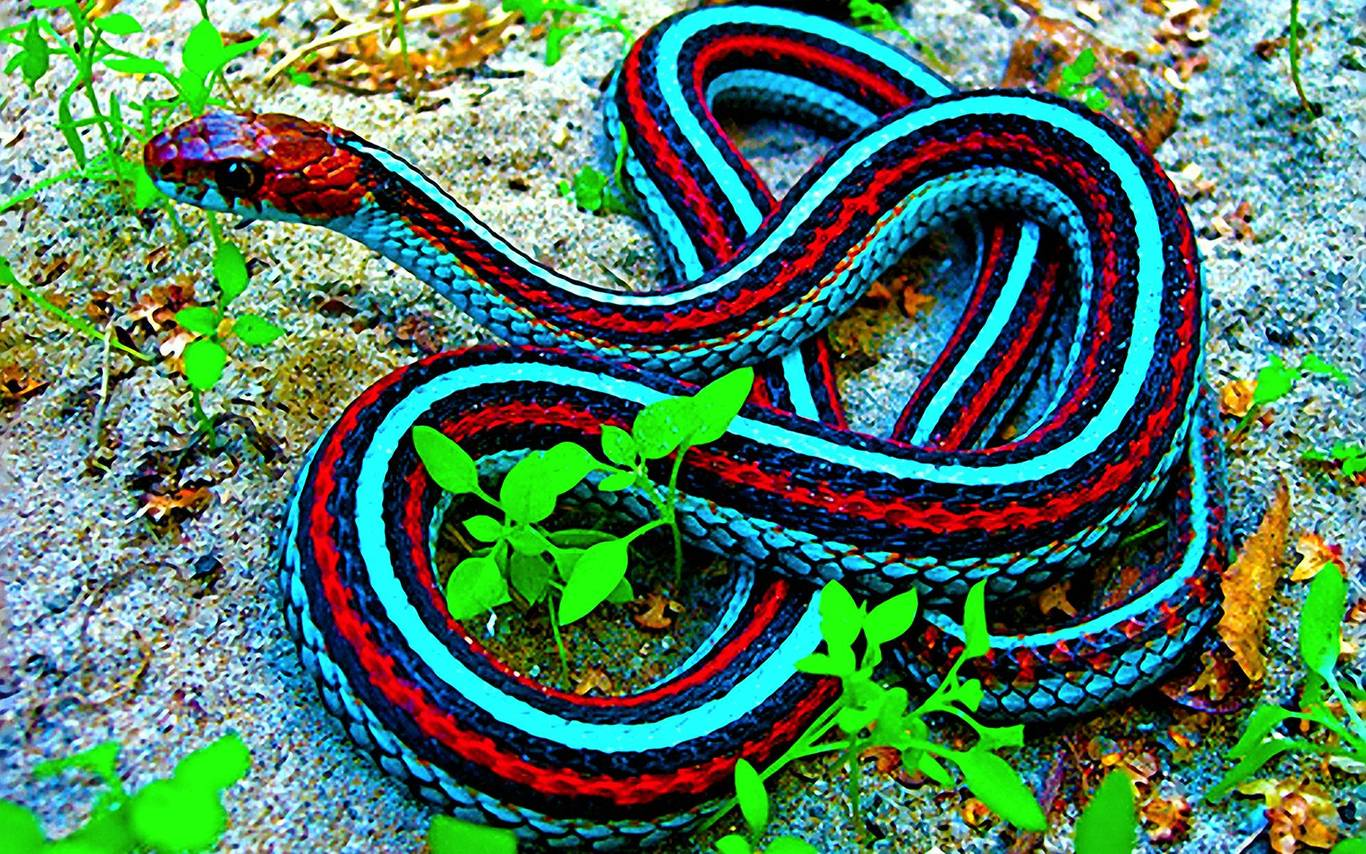 the snake wallpapers - photo #47