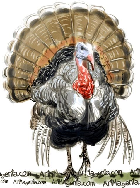 Turkey sketch painting. Bird art drawing by illustrator Artmagenta