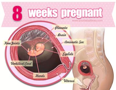 berjaya hamil 8 minggu
