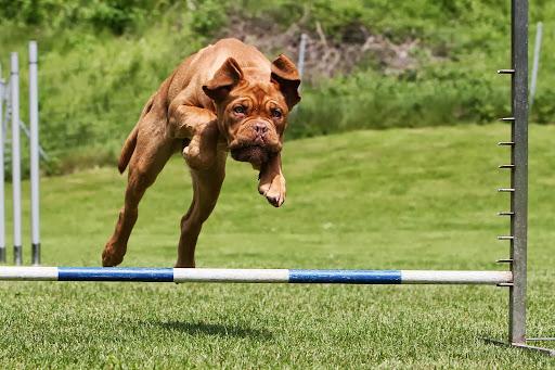 Hundeschule KaSi
