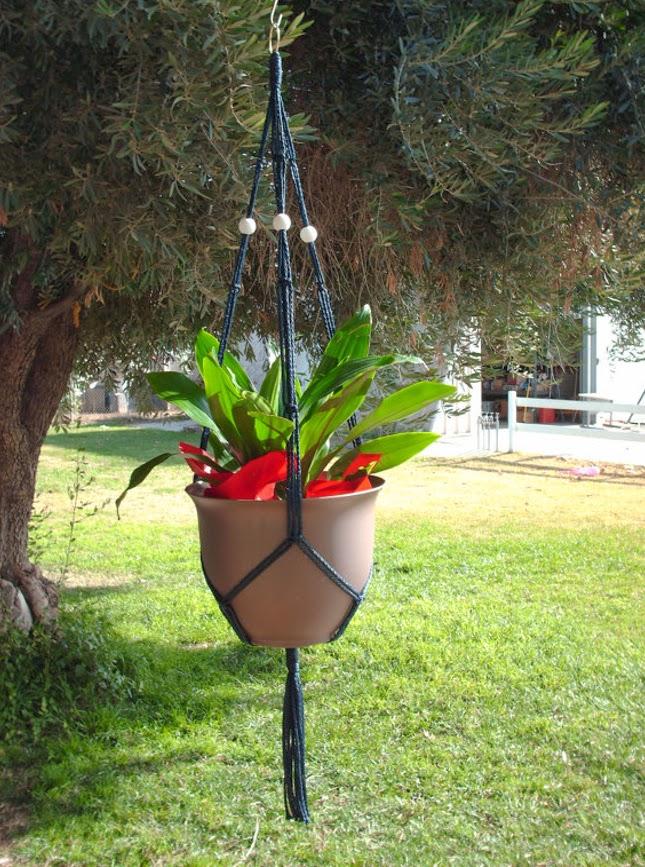 Plantas-penduradas-1