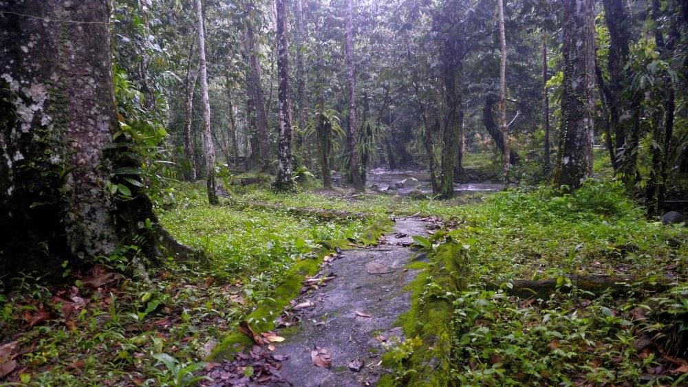 Bagaimana rasa kerkhemah dalam hutan di musim hujan