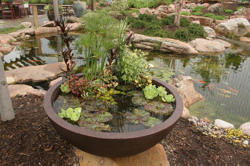 Patio container water garden ideas home decorating ideas for Container pond