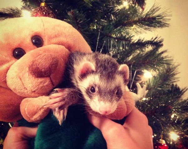 Bullet the Ferret Christmas Stocking