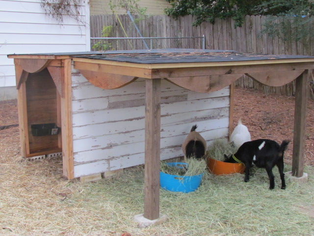 Dairy Goat Barn Plans House Design And Decorating