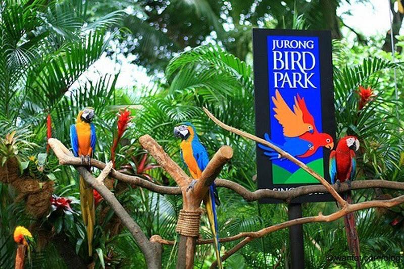taman-burung-jurong-singapore