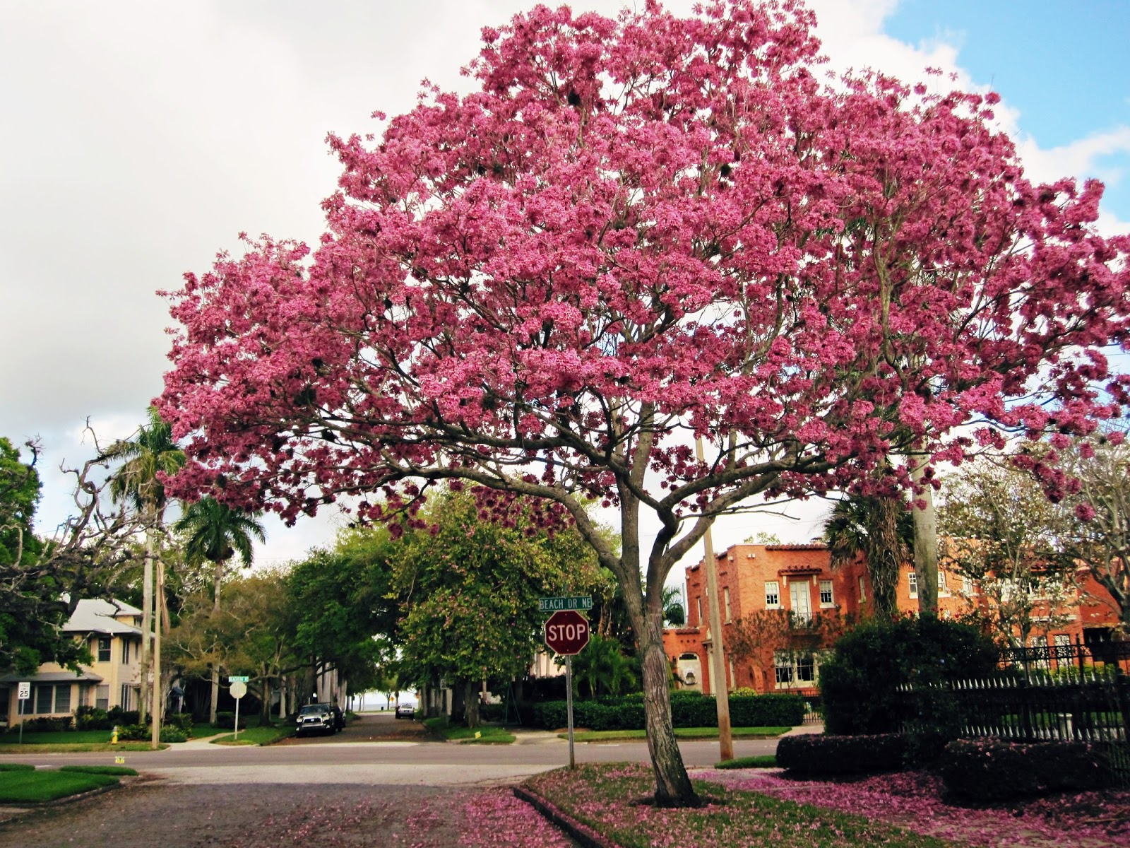 Spring Break In Florida | Beauty In The Midst Of Sorrow