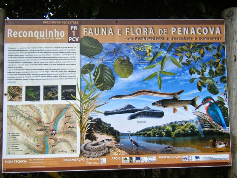 Fauna e Flora de Penacova