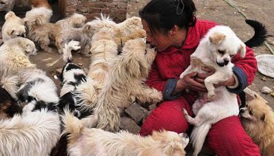 Activistas impiden la venta de 1.000 perros a restaurantes de lujo en China.
