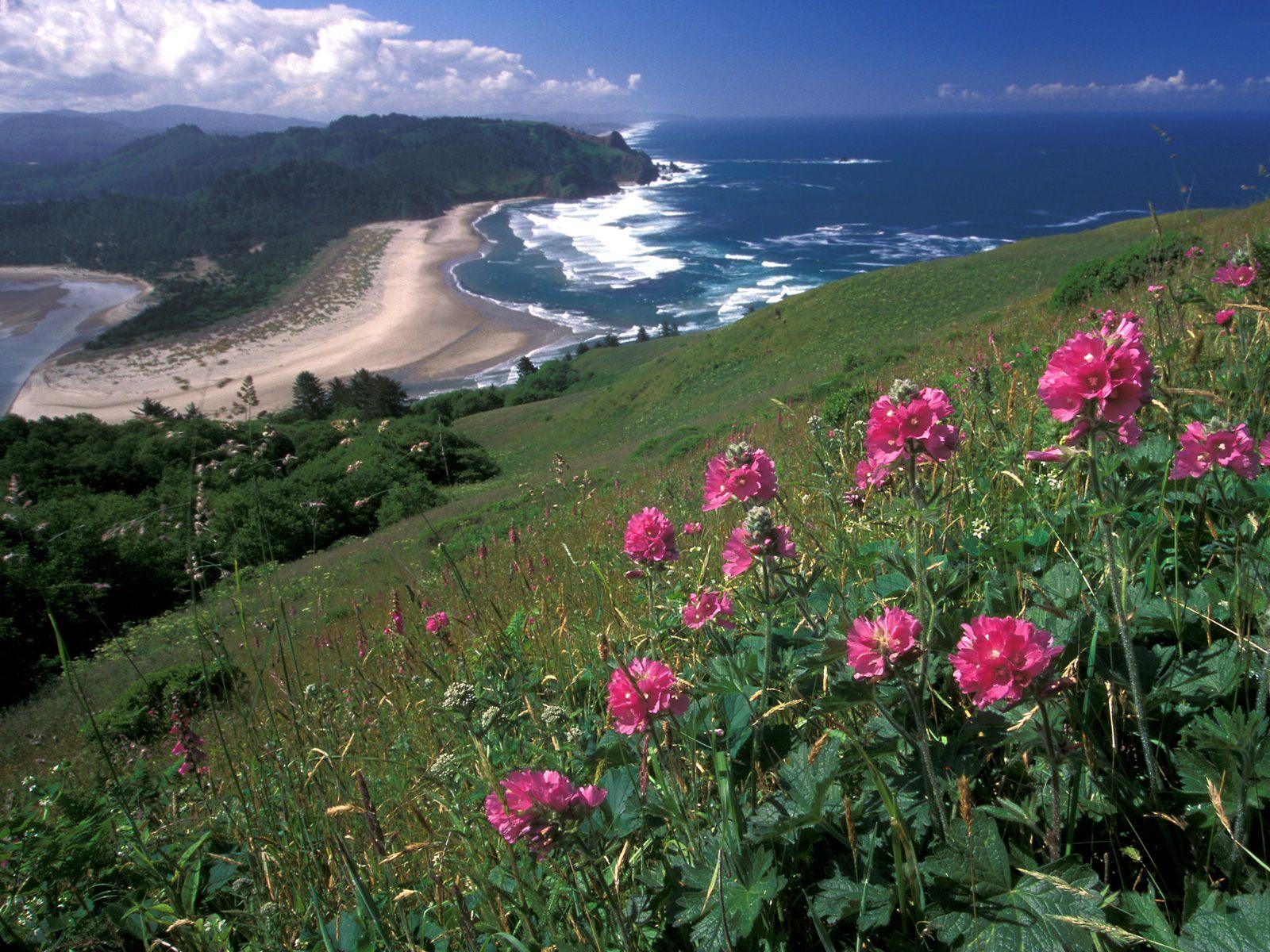 http://4.bp.blogspot.com/-mS6IAk0yIic/Tn4X3qYJguI/AAAAAAAAC7g/72oSjHkQwbk/s1600/Nature%2BWallpapers%2B%252840%2529.jpg
