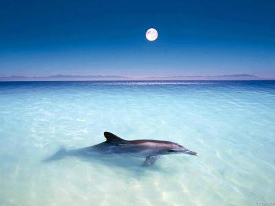 delfín agua cristalina