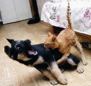 小猫欺负大狗 - 雪山 - .