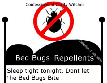 Common Bugs Found In Dorm Rooms