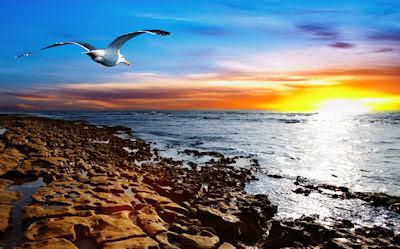 Vuela bajo el cielo y sobre el mar, en la búsqueda contínua de tu libertad.