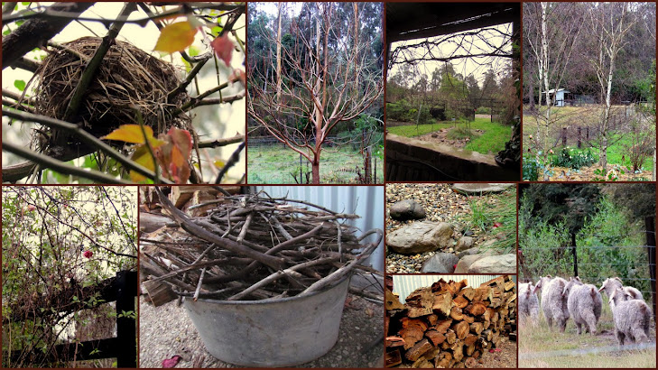 My Winter Garden 2011
