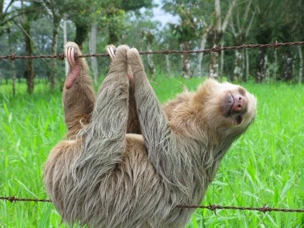 Cute funny animalz november 2013 - Funny sloth pics ...