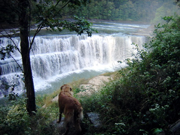 Letchworth State Park Is It Dog Friendly