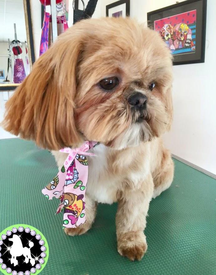Mutleys Dog Grooming Ashby
