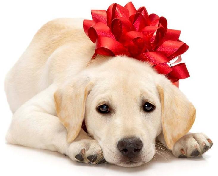 Alla Ricerca Del Siberian Husky Come Scegliere Il Cane Perfetto