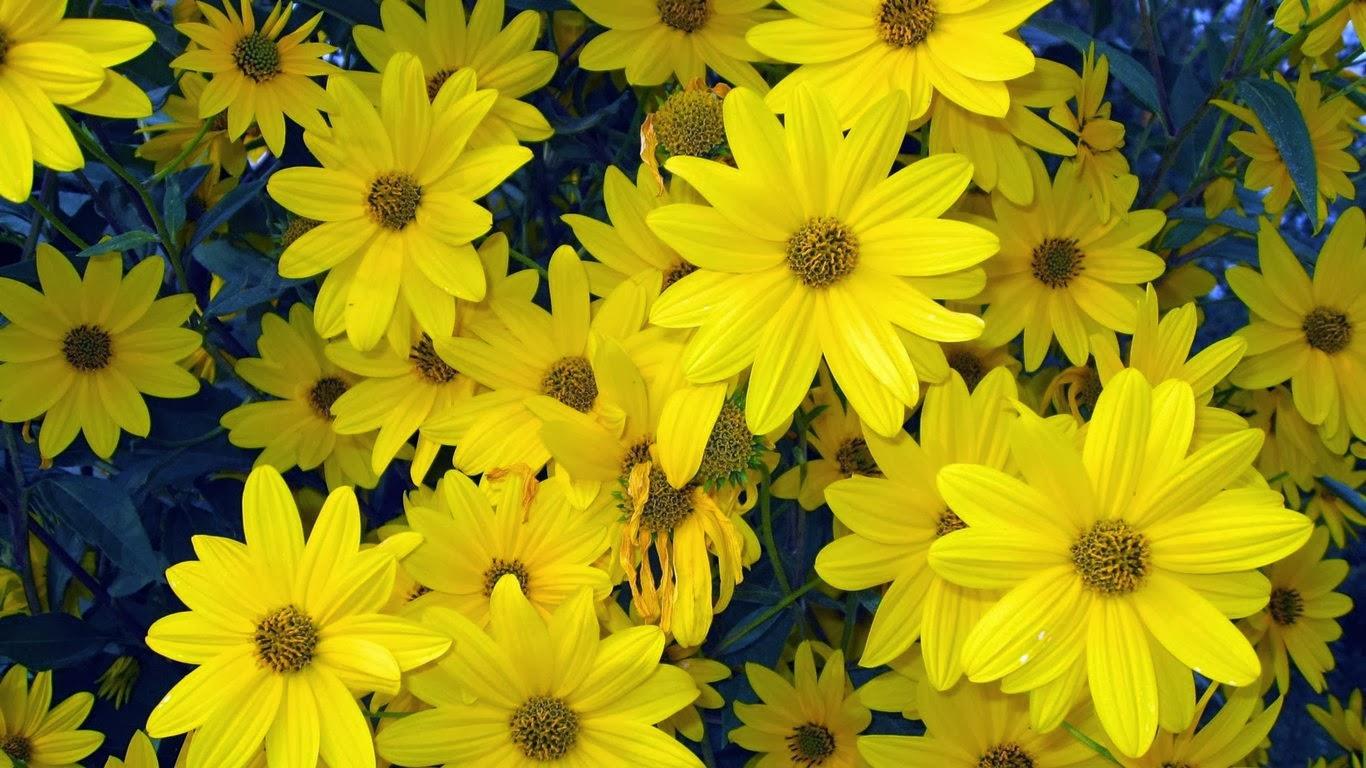 Hd Wallpaper Yellow Spring Natural Flowers Hd Wallpaper Hd